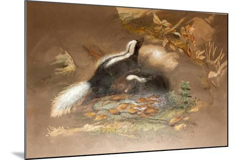 American Skunk-Joseph Wolf-Mounted Giclee Print