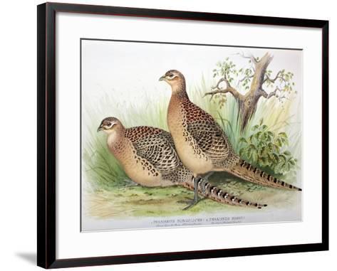 Phasianus Mongolicus and Phasianus Shawi, 1906-7-Henry Jones-Framed Art Print