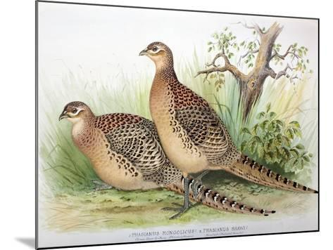 Phasianus Mongolicus and Phasianus Shawi, 1906-7-Henry Jones-Mounted Giclee Print