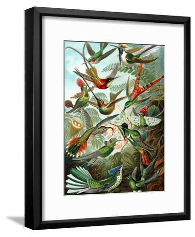 Example from the Family Trochilidae, 'Kunstformen Der Natur', 1899-Ernst Haeckel-Framed Art Print