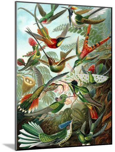 Example from the Family Trochilidae, 'Kunstformen Der Natur', 1899-Ernst Haeckel-Mounted Giclee Print