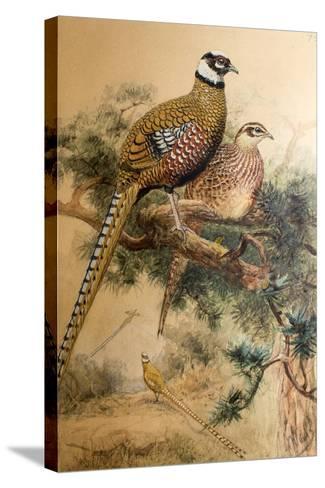 Bar-Tailed Pheasant (Phasianus Reevesi), 1852-54-Joseph Wolf-Stretched Canvas Print