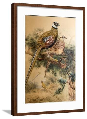 Bar-Tailed Pheasant (Phasianus Reevesi), 1852-54-Joseph Wolf-Framed Art Print