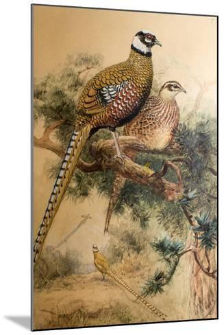 Bar-Tailed Pheasant (Phasianus Reevesi), 1852-54-Joseph Wolf-Mounted Giclee Print