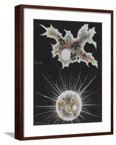 Amoeba-Philip Henry Gosse-Framed Art Print