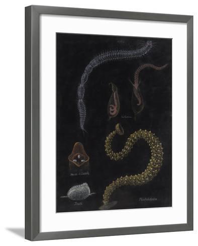 Annelid Worms-Philip Henry Gosse-Framed Art Print