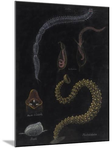Annelid Worms-Philip Henry Gosse-Mounted Giclee Print