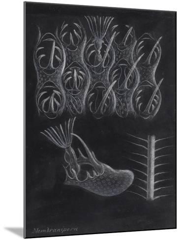 Bryozoa-Philip Henry Gosse-Mounted Giclee Print