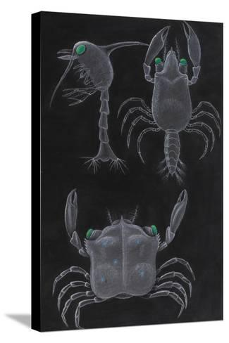 Crab Development-Philip Henry Gosse-Stretched Canvas Print