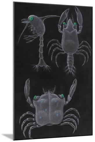 Crab Development-Philip Henry Gosse-Mounted Giclee Print