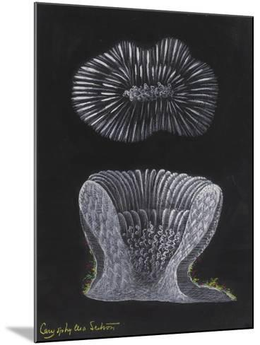 Devonshire Cup Coral-Philip Henry Gosse-Mounted Giclee Print
