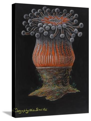 Devonshire Cup Coral-Philip Henry Gosse-Stretched Canvas Print