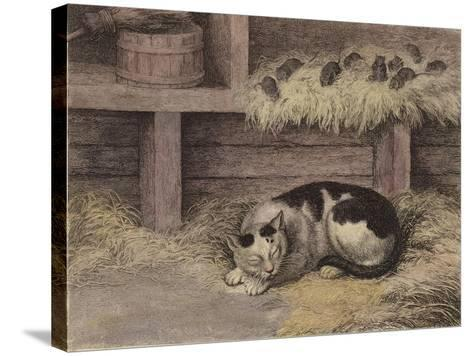 Cat and Mice in a Barn--Stretched Canvas Print