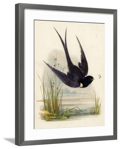 Swift--Framed Art Print