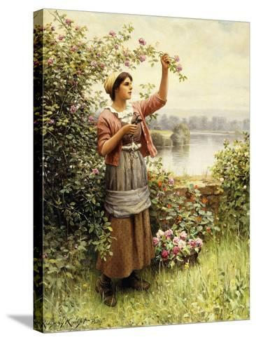 Cutting Roses Along the Seine-Daniel Ridgway Knight-Stretched Canvas Print