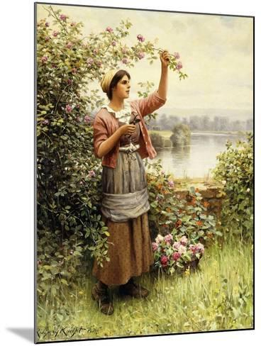 Cutting Roses Along the Seine-Daniel Ridgway Knight-Mounted Giclee Print
