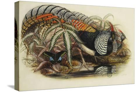 Lady Amherst's Pheasant-Henry Constantine Richter-Stretched Canvas Print
