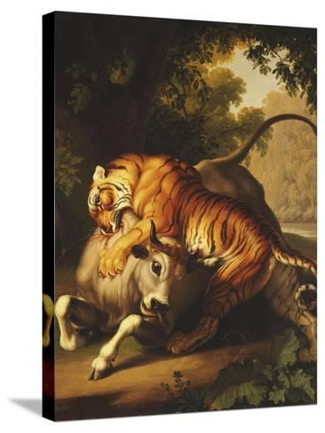 A Tiger Attacking a Bull, 1785-Johan Wenzel Peter-Stretched Canvas Print