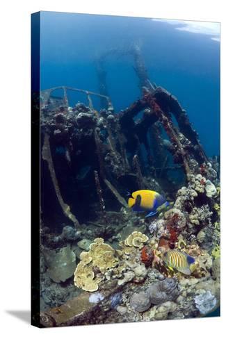 Kasi Maru Shipwreck And Fish-Georgette Douwma-Stretched Canvas Print