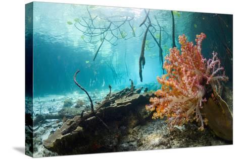 Corals In a Mangrove Swamp-Georgette Douwma-Stretched Canvas Print