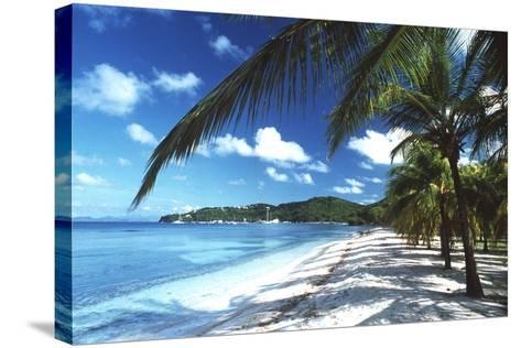 Beach with Palm Trees-Peter Falkner-Stretched Canvas Print