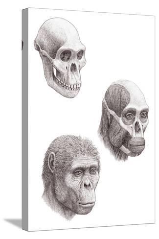 Australopithecus Africanus-Mauricio Anton-Stretched Canvas Print