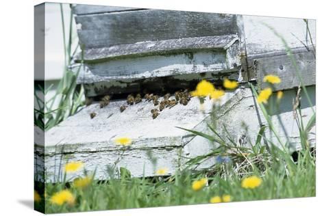 Bee Hive-David Aubrey-Stretched Canvas Print