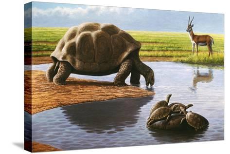 Giant Tortoise-Mauricio Anton-Stretched Canvas Print