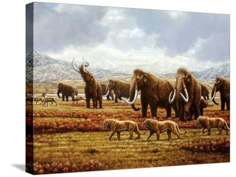 Woolly Mammoths-Mauricio Anton-Stretched Canvas Print