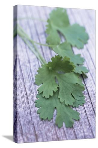 Coriander Leaves-Maxine Adcock-Stretched Canvas Print