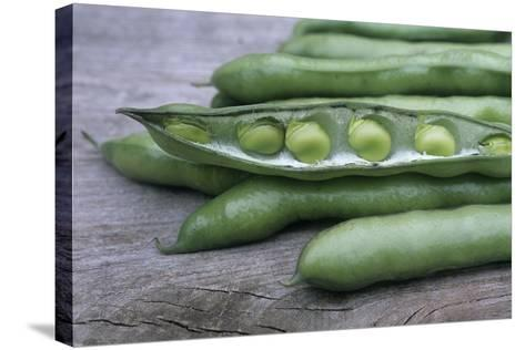 Organic Broad Beans (Vicia Faba)-Maxine Adcock-Stretched Canvas Print