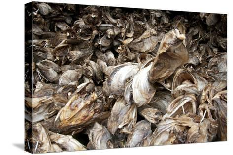 Stockfish, Norway-Dr. Juerg Alean-Stretched Canvas Print