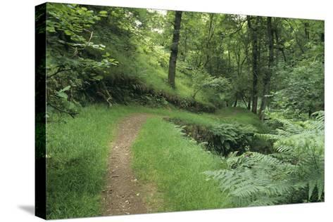 Woodland Path-David Aubrey-Stretched Canvas Print