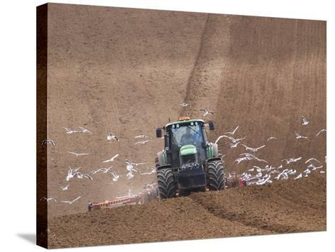 Sowing a Cereal Crop In Mid March-Adrian Bicker-Stretched Canvas Print