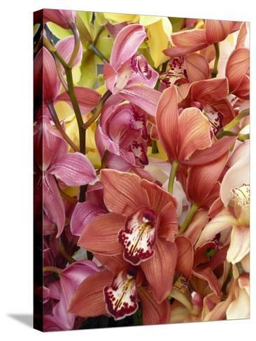 Mixed Orchids-Tony Craddock-Stretched Canvas Print