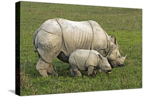 Indian Rhinoceroses-Tony Camacho-Stretched Canvas Print