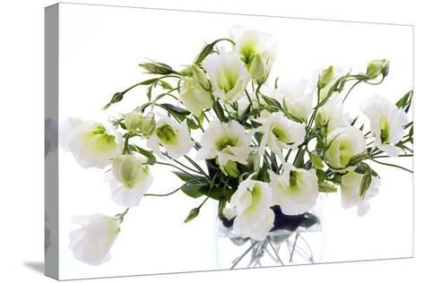Lisianthus Flowers (Lisianthus Sp.)-Erika Craddock-Stretched Canvas Print