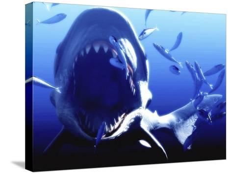 Megalodon Prehistoric Shark-Christian Darkin-Stretched Canvas Print