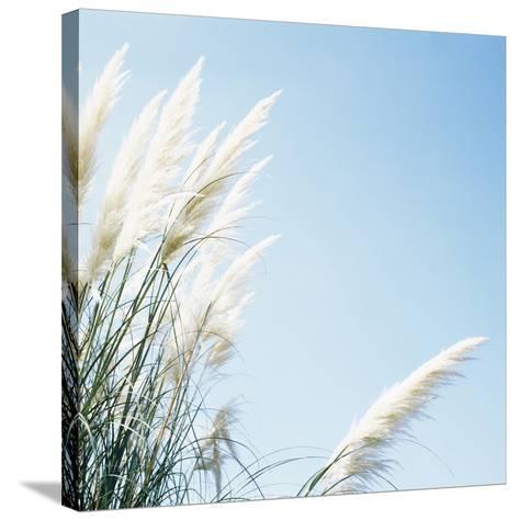 Pampas Grass-Cristina-Stretched Canvas Print