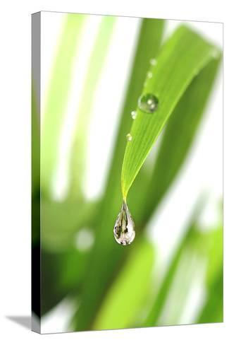 Dewdrop on a Leaf-Crown-Stretched Canvas Print