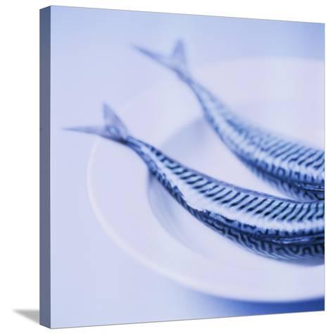 Mackerel-Cristina-Stretched Canvas Print