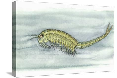 Fairy Shrimp, Artwork-Lizzie Harper-Stretched Canvas Print