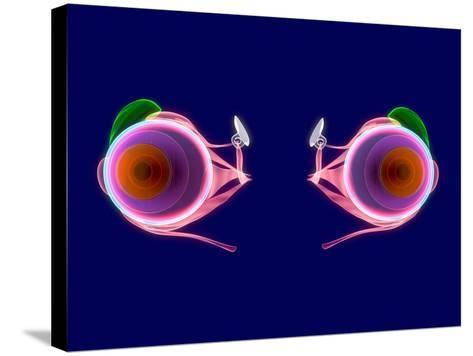 Human Eye Anatomy, Artwork-Roger Harris-Stretched Canvas Print