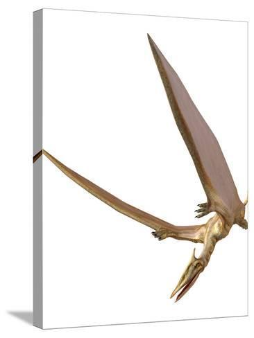 Pterosaur Flying, Computer Artwork-Roger Harris-Stretched Canvas Print