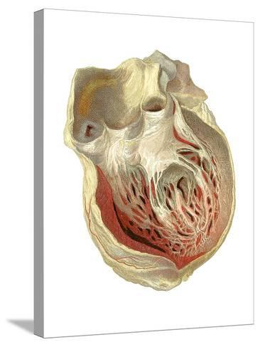 Heart Anatomy, Artwork-Mehau Kulyk-Stretched Canvas Print