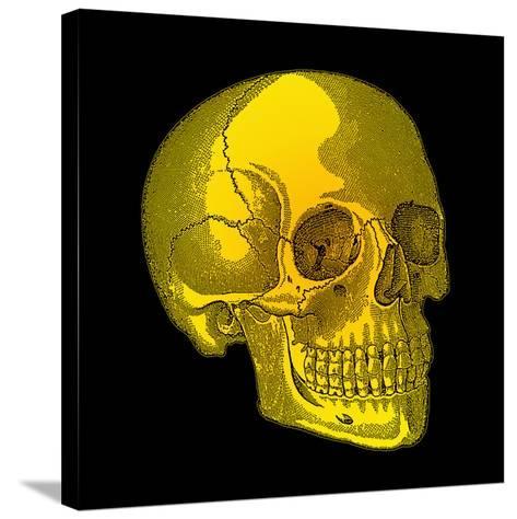 Human Skull-Mehau Kulyk-Stretched Canvas Print