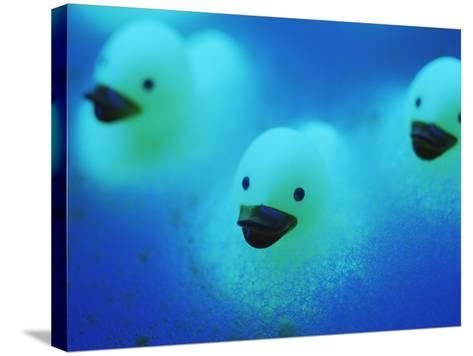 Rubber Ducks-Lawrence Lawry-Stretched Canvas Print