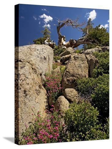 Granite Outcrop-Bob Gibbons-Stretched Canvas Print