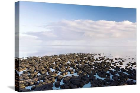 Stromatolites In Australia-Bob Gibbons-Stretched Canvas Print
