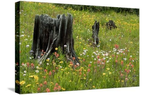 Wildflower Meadow-Bob Gibbons-Stretched Canvas Print